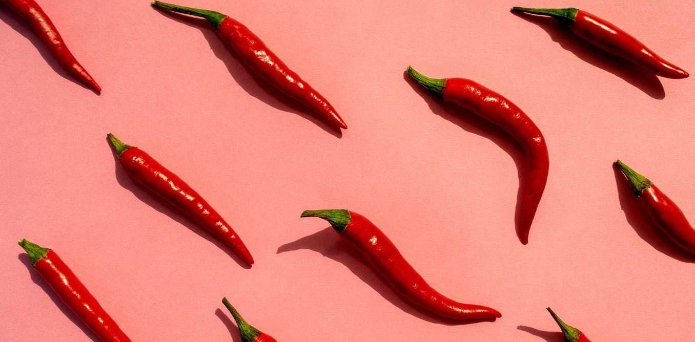 Solar panels capture more sunlight with capsaicin - the chemical that makes chili peppers spicy