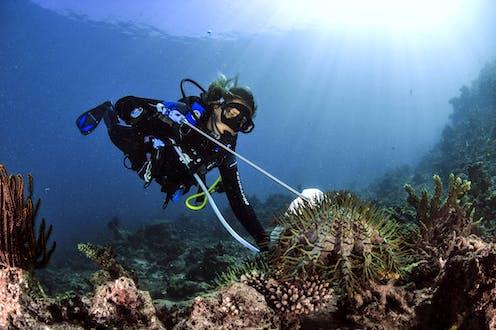 Plongeuse effectuant une mesure