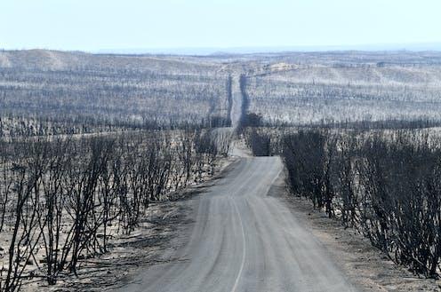 Post-bushfire landscape at Kangaroo Island, Australia.