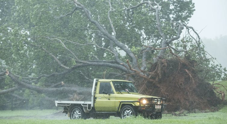 A tree lies uprooted in Darwin after a cyclone.