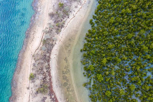 Aerial view of mangrove forests in Madagascar