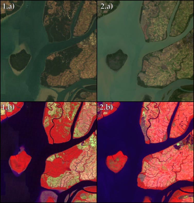 Satellite images showing mangrove deforestation.