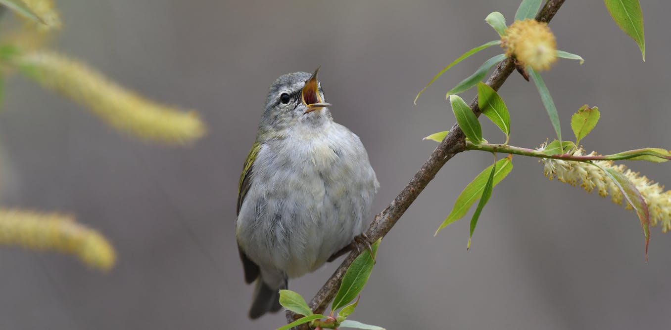 Cities can help migratory birds along the way by planting more trees and turning off lights at night