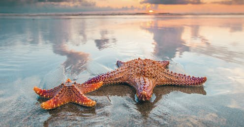 Two starfish on a beach.