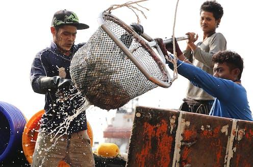 Three men unloading fish at a jetty.