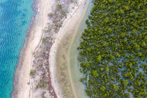 Aerial view hutan mangrove di Madagaskar.