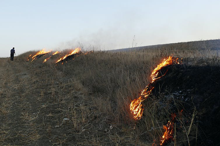 A man attends fires burning slowly across a small hill in a vast field.