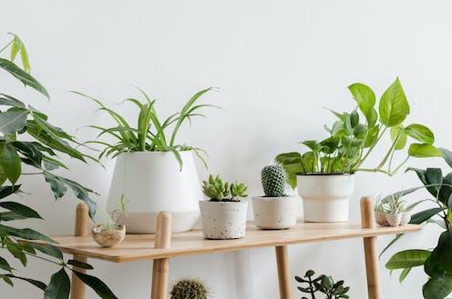 Tiestos con plantas en el interior de una vivienda.