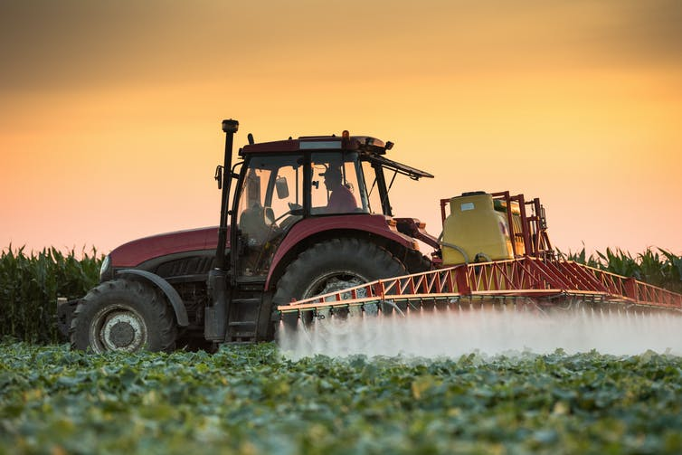 A tractor sprays chemicals onto a vegetable field at dusk.