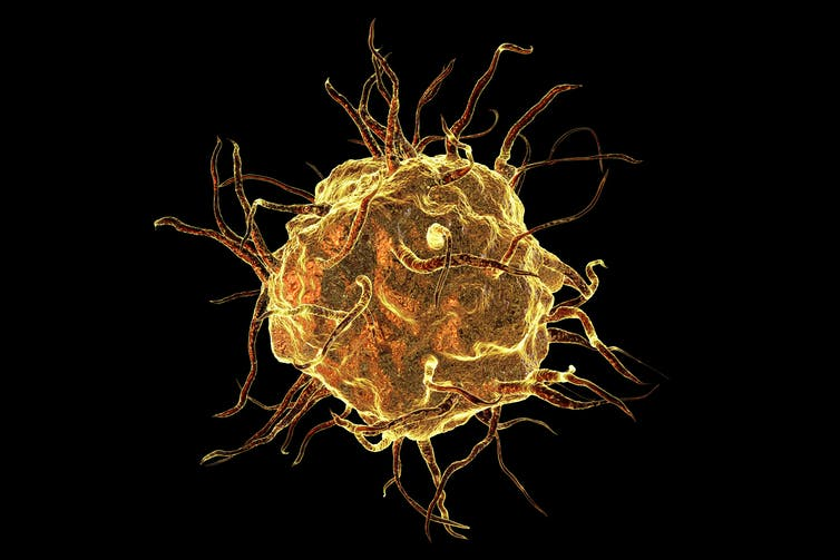 Image of a macrophage cell.