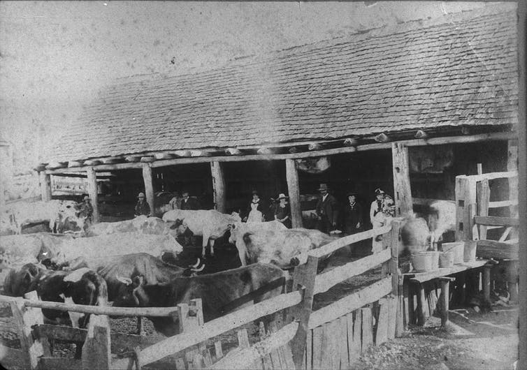 Black and white photograph of a cattle yard.