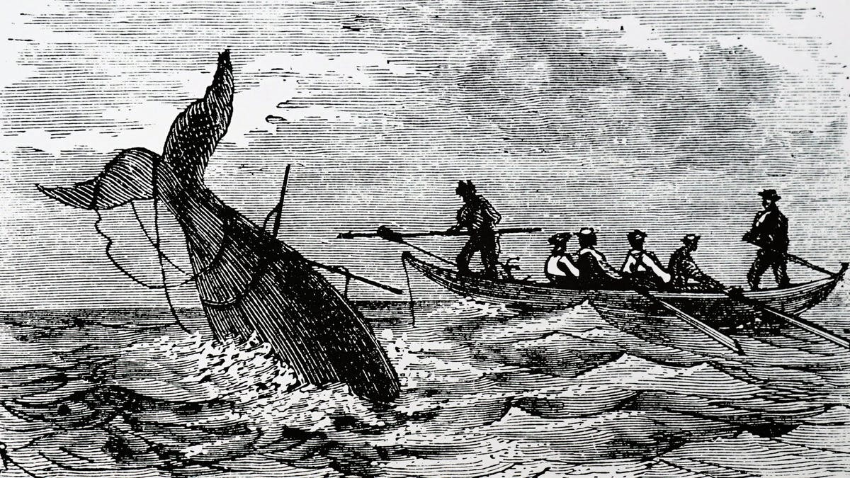 The viral 'Wellerman' sea shanty is also a window into the remarkable  cross-cultural whaling history of Aotearoa New Zealand