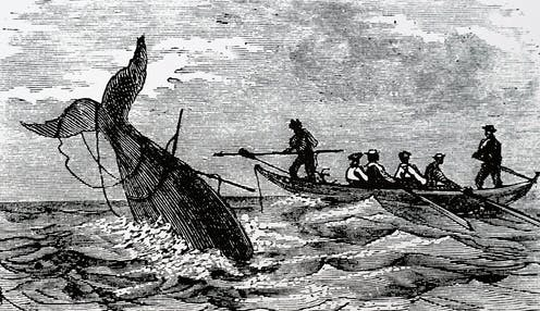 engraving of whaling