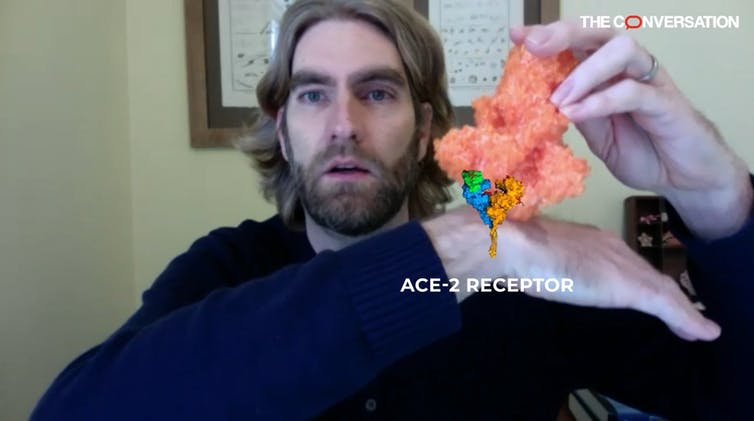 The scholar uses a 3D printed model of a spike protein and to explain how it targets the ACE-2 receptor. An artist has added  a digital illustration of the ACE-2 receptor on his hand to illustrate the process clearly.