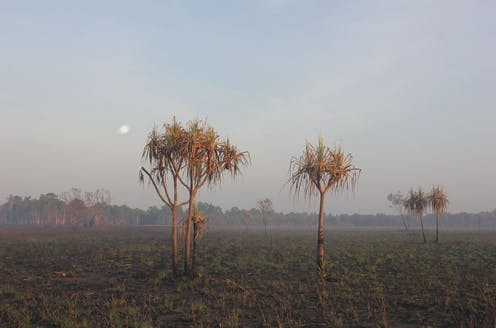 Burnt ancient nutshells reveal the story of climate change at Kakadu — now drier than ever before