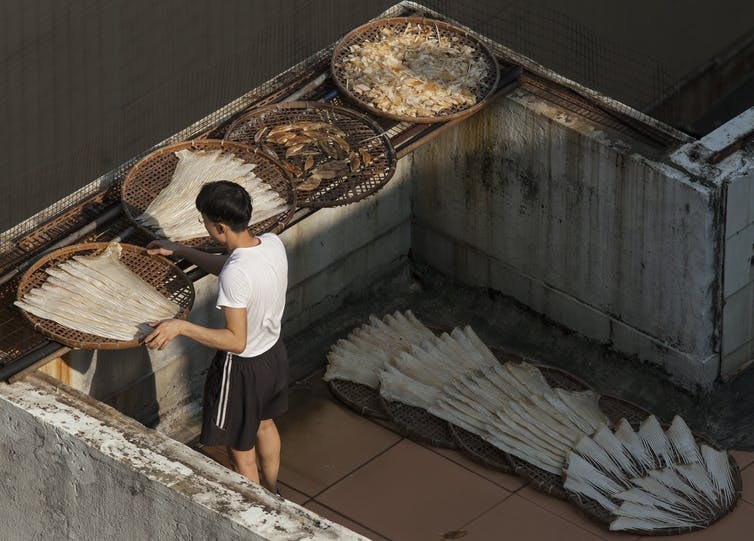 A worker attends a bowl of shark fins drying on a rooftop, surrounding by other shark products.