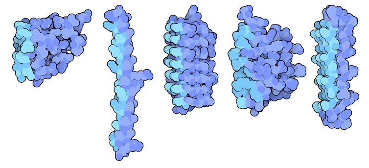 Diagrams of antifreeze protein molecules produced by fish and insects