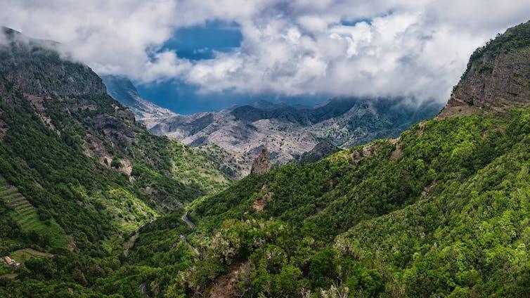 Bosques en La Gomera (islas Canarias). Jörg Bergmann / Flickr, CC BY-NC-ND