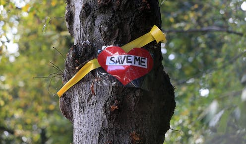 Tree with 'save me' sign