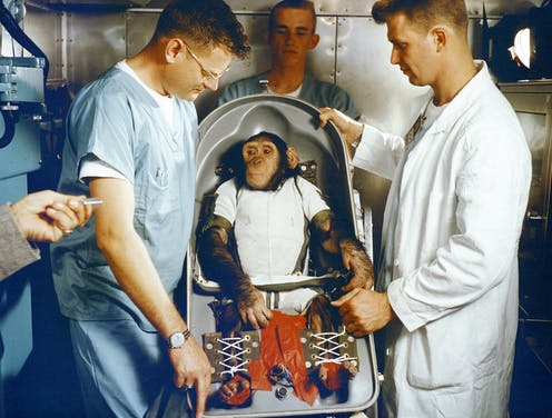 A chimpanzee wearing white clothing strapped into a seat surrounded by three men in lab coats.