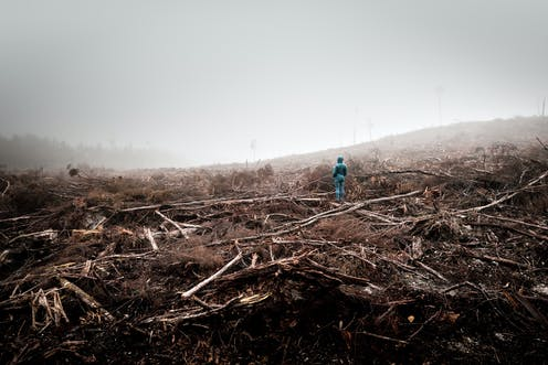 Person stands in logged Tarkine forest