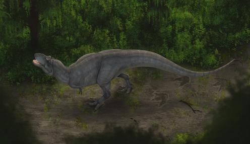 Illustration shows a lone _Albertosaurus_ leaving three-toed footprints behind in the mud as it walks.