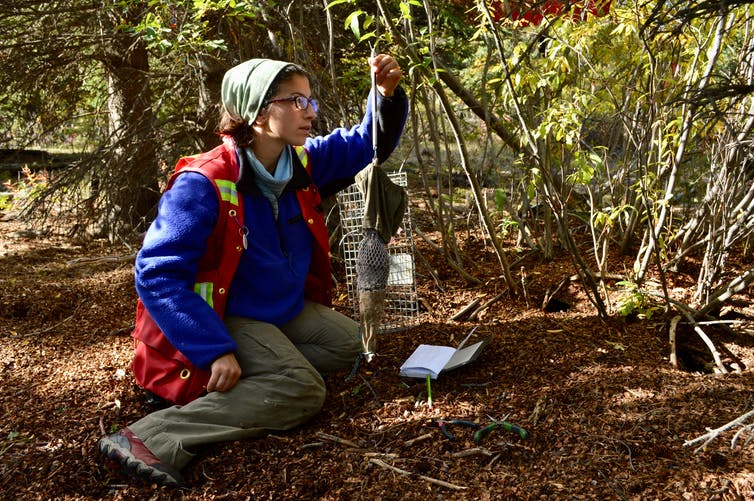 researcher weighs a squirrel