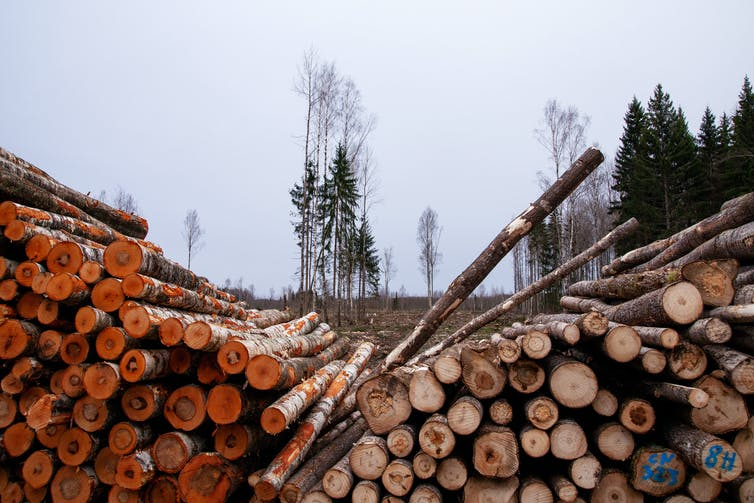 Logs felled in timber operation