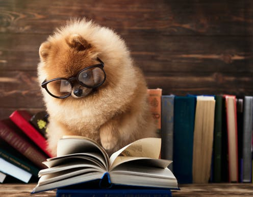 A dog with glasses on looking at an open book.