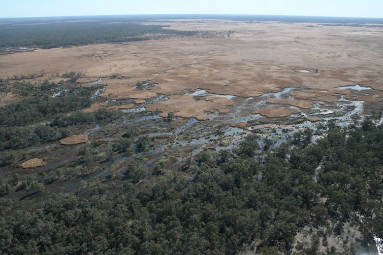 An aerial view of a dry plain on one side and an expanse of green and damp habitat on the other.