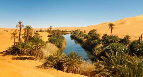 A pool of water surrounded by palms in an otherwise vast sandy desert.