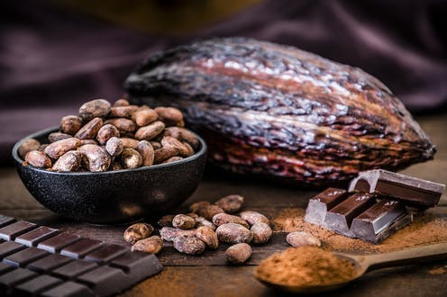 Chocolate bar, cocoa powder, cocoa beans and cocoa pod grouped together on a wooden table.