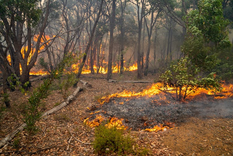 Small fires on the forest floor surrounded by blackened trees.