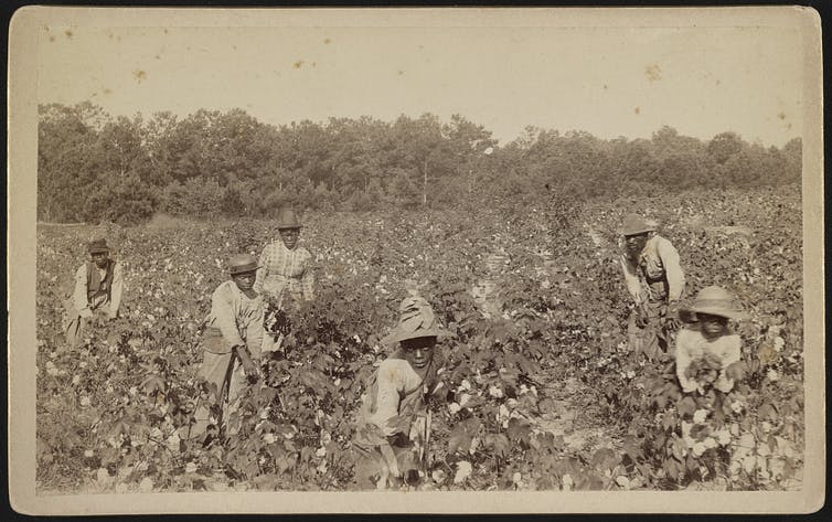 Sepia-toned lithograph of six Black men and women in sunhats and overalls in a cotton field