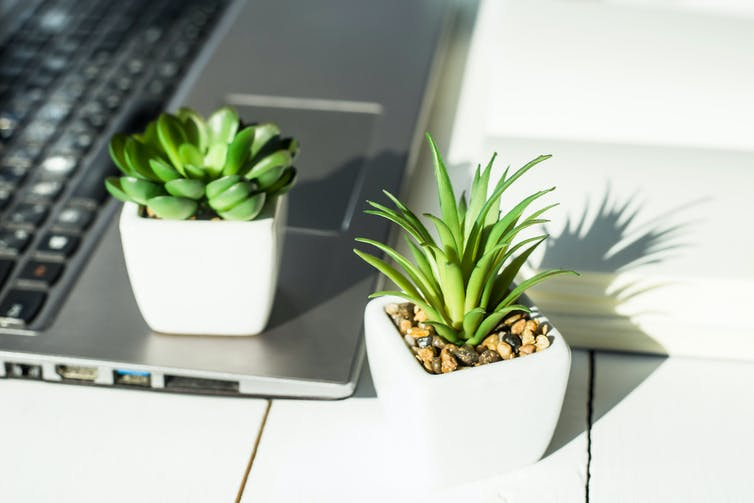 Succulent plants on a laptop.