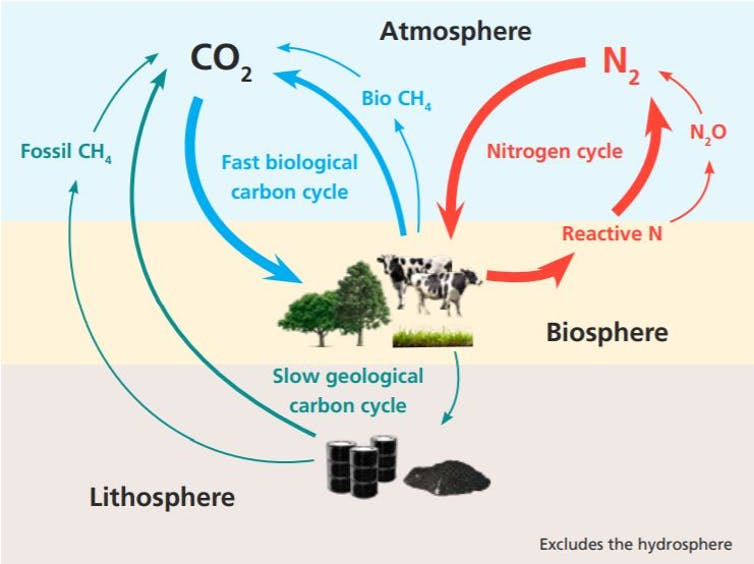 Diagram showing the global carbon and nitrogen cycles and their interaction with land use.