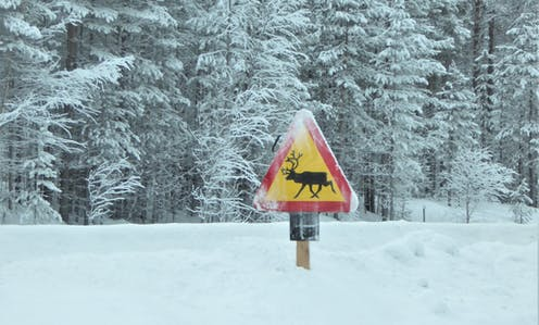 A road sign warning drivers of reindeers crossing.