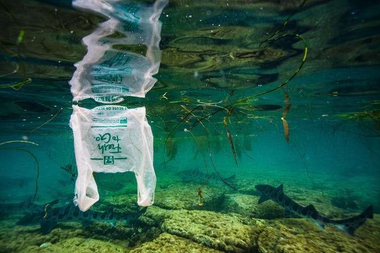 Plastic bag drifting in shallow water.