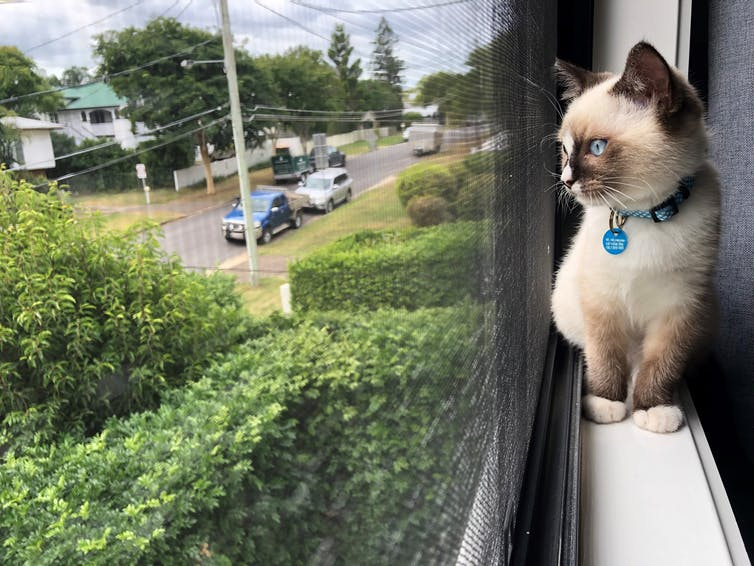 Cat on a windowsill