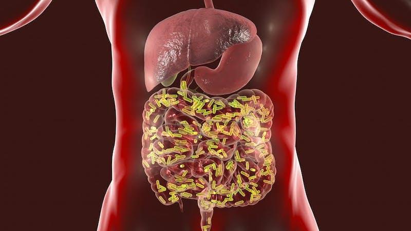 Así es como tus bacterias y microbios pueden salvarte de enfermedades como el COVID-19