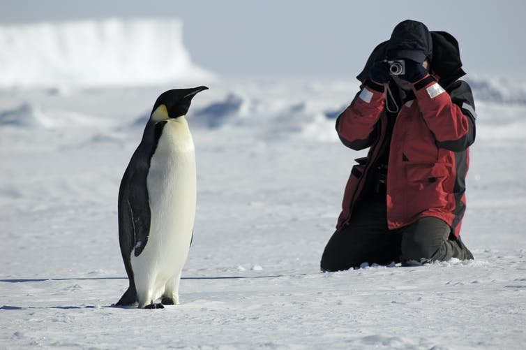A tourist sits near a penguin and takes a photo