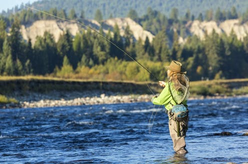 Woman with fly rod and net fishing in a stream