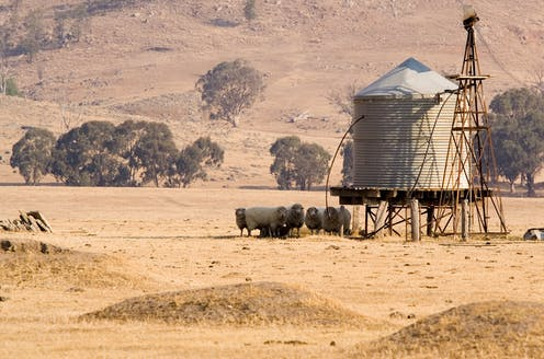 Sheep on dry land by a water tank