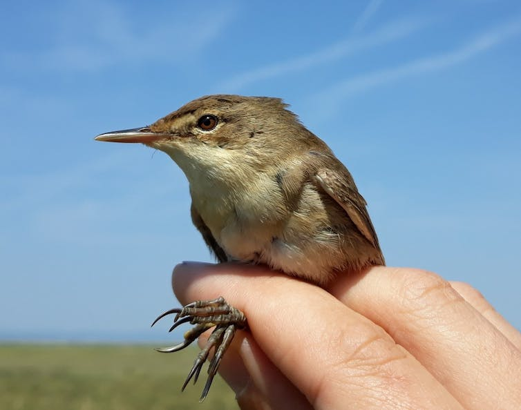 A hand holds a small brown bird against a blue sky background