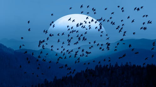 A flock of birds flies in front of a large rising moon