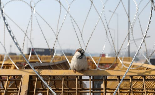 A small bird rests on a fence amid barbed wire.