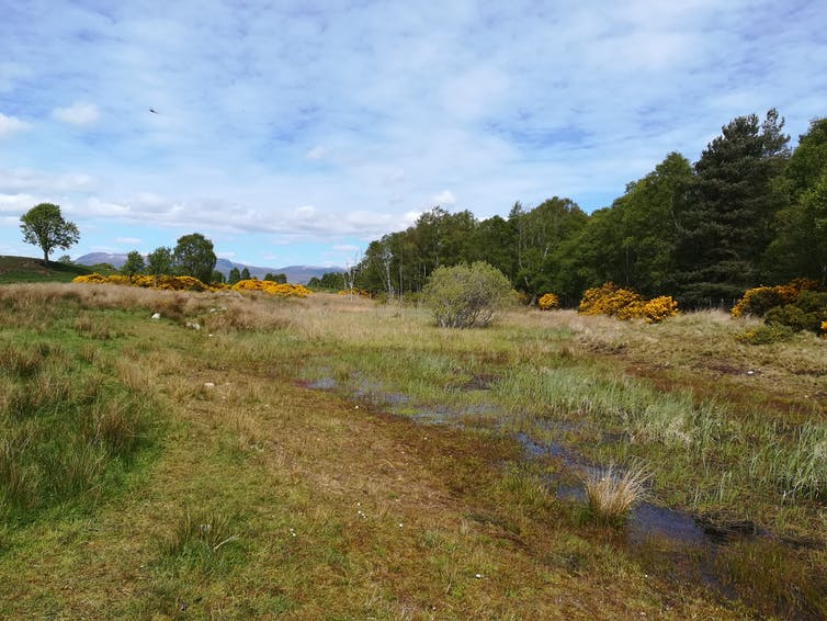 A pond amid a boggy scrubland with trees in the background.