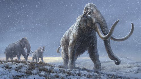 A drawing of three steppe mammoths in a flat, snowy landscape.