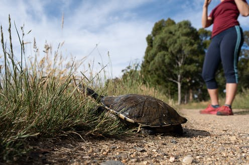 A woman in gym gear stands near a turtle by the side of a gravel path