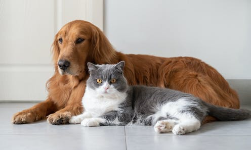 A dog and a cat lying next to each other.